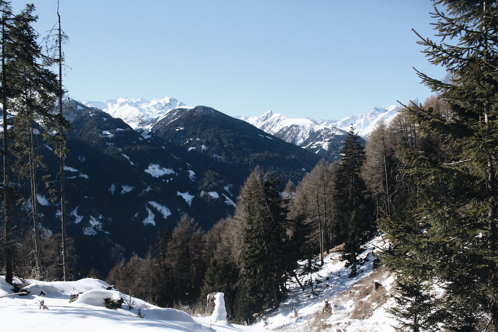 alps forest