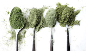 green superfood powders mochni