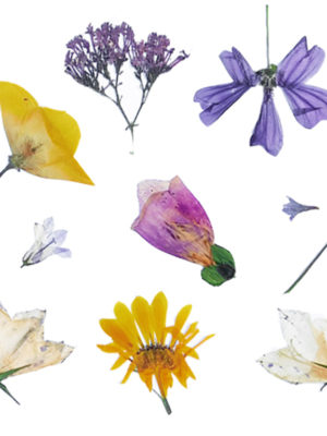 Essential Oils: Are They Good Or Bad For Our Skin?