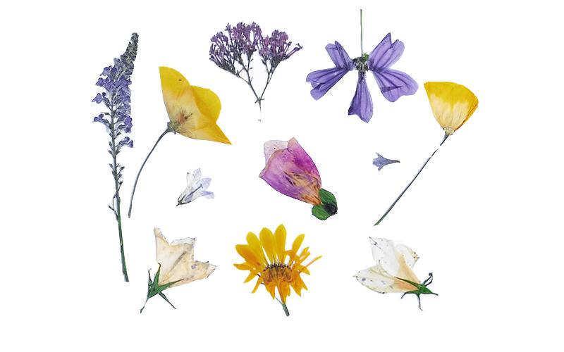 essential oils plants