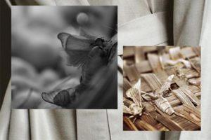 Ethical Silk