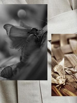 Peace Silk: How Ethical Is Commercial Silk vs. Peace Silk Really?